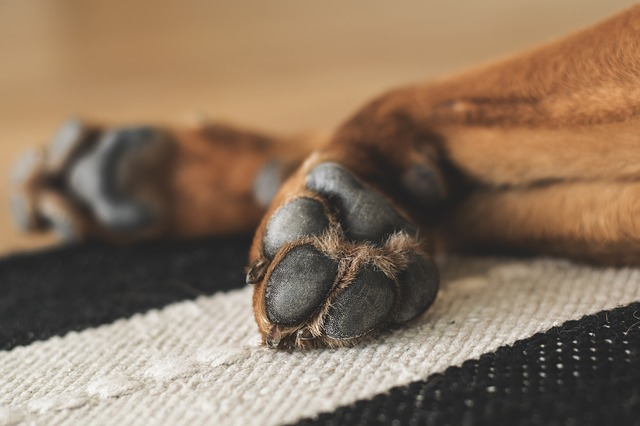 Is Your Dog Constantly Biting Their Paws? Here's How You Can Help