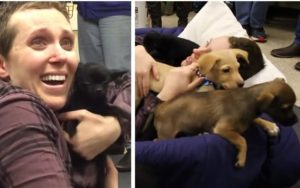 "Most cancers Affected person Will get The Finest Shock Ever When She's ""Showered With Puppies"""