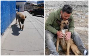 Stunt Performer Steve-O Befriends A Avenue Canine & Can't Go Dwelling With out Her