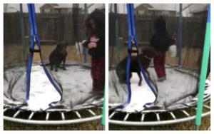 Canine Will get On Snow-Lined Trampoline With His Human & His Response Is Hilarious