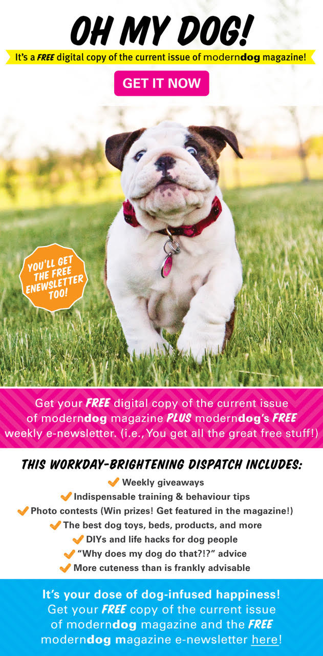 Get Your Free Digital Issue Of Modern Dog Magazine