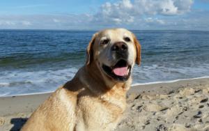 Canine Behaviorist Says Canine Want Holidays Simply As A lot As Folks