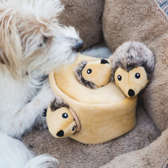 The 12 Best Toys For Senior Dogs