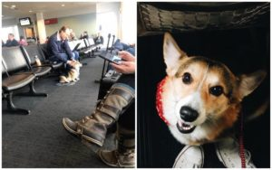 Previously Uncared for Rescue Canine Comforts A Grieving Stranger In The Airport