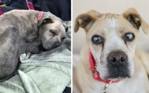 Blind Senior Canine Rescued From Junkyard Seeks A Buddy To Share His Twilight Time
