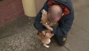 Veteran Is Elated When Stolen Service Canine Is Returned To Him