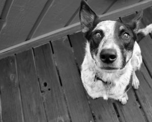 9 Canine Myths That Want To Be Busted