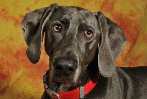 Does Your Canine Have Fixed Ear Infections? This Powerhouse Nutrient Can Assist