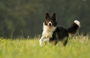 The High 10 Quickest Canine Breeds