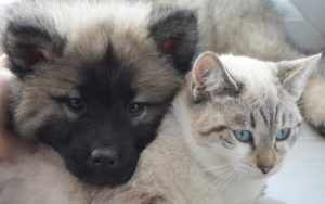 How To Guarantee Your Pets Are Cared For, Ought to You Go Away