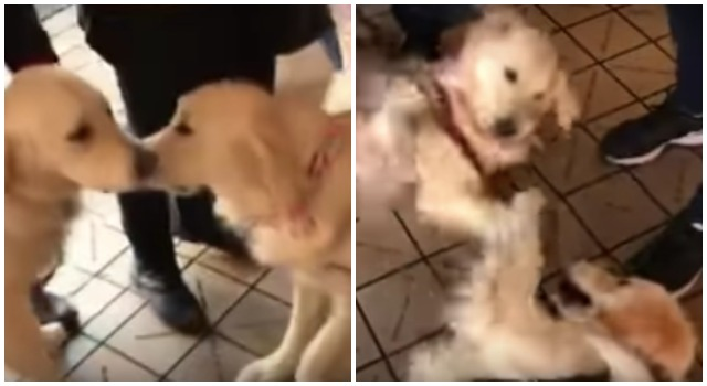 Dog Sisters Unexpectedly Reunite & Their Reaction Is Priceless