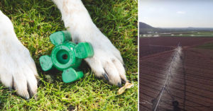 Farmers Have Stored This Insanely Sturdy Canine Toy a Secret for 12 Years!