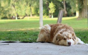 How To Assist Your Canine Regain Confidence After A Traumatic Incident