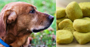 7 Causes To Give Your Older Canine Turmeric Each Day