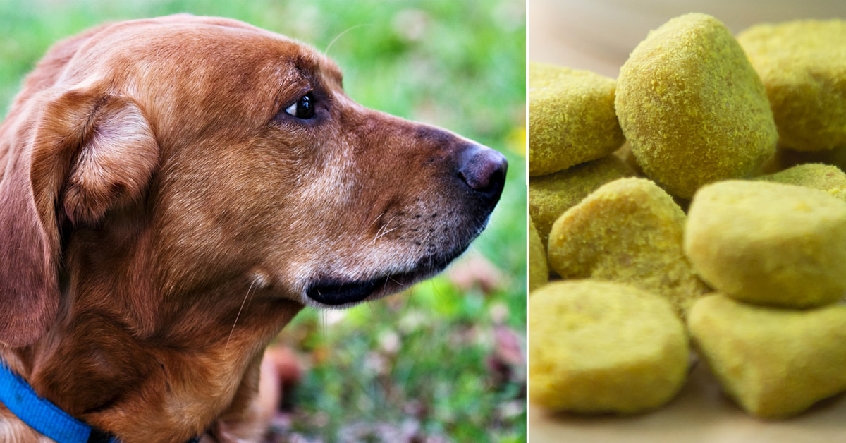 7 Reasons To Give Your Older Dog Turmeric Every Day