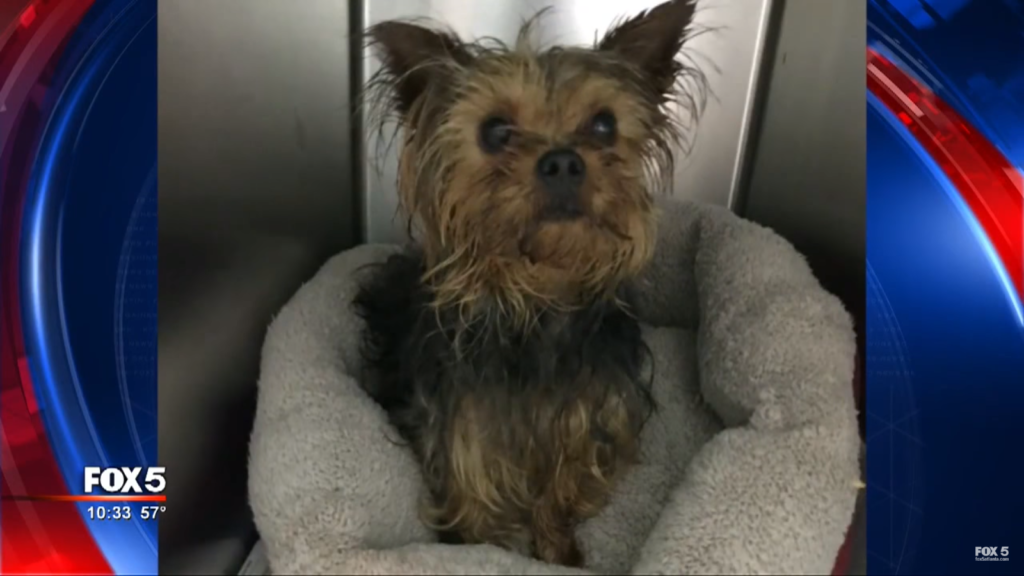 Dog Is Stolen From Shelter Moments Before Being Adopted