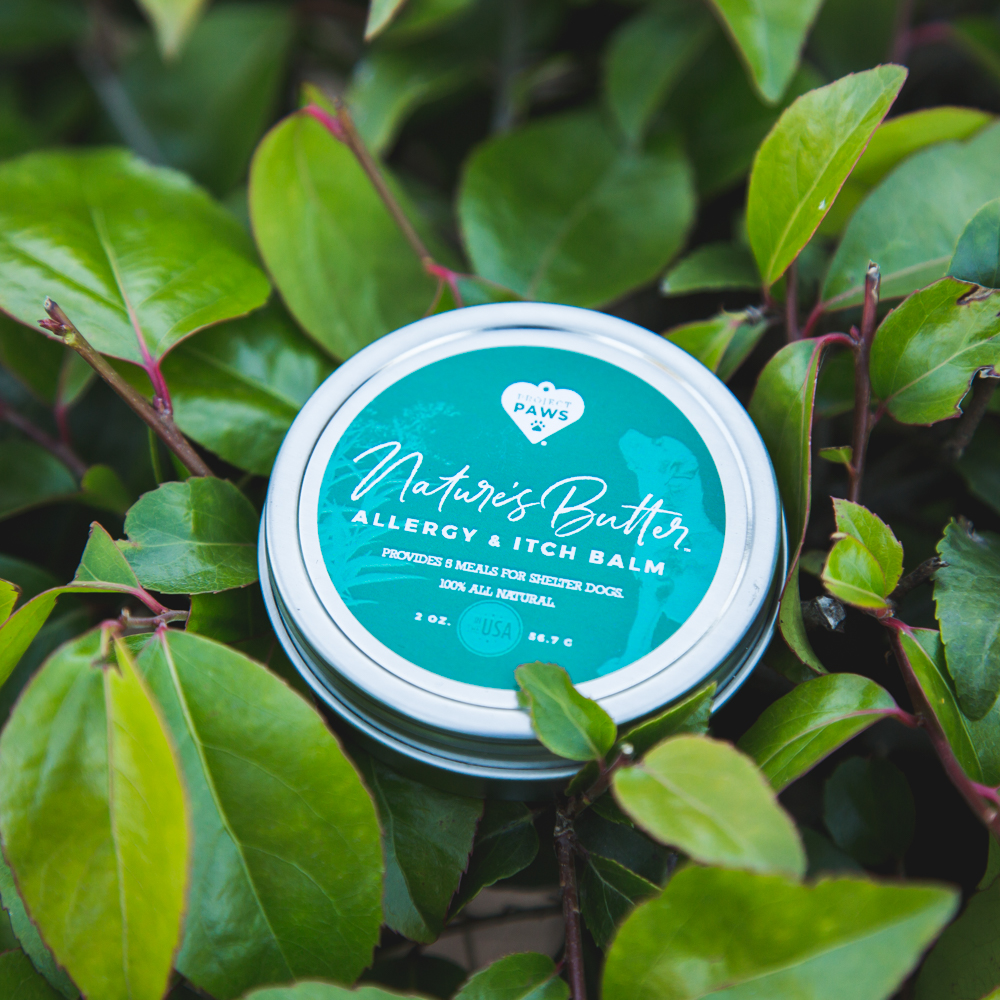 Natures Butter Allergy Itch Balm With Neem Oil For Dogs 2 Oz
