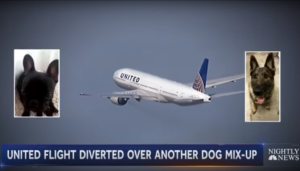 United Faces One other Canine Dilemma After Canine Positioned On Incorrect Flight