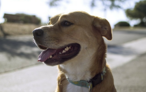 England Plans To Be part of The Relaxation Of The UK In Banning Shock Collars