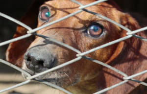 Shelter Guidelines Require Appointment, Analysis Earlier than Accepting Surrendered Canine