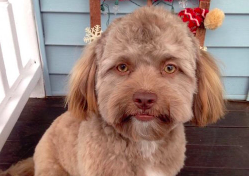Does This Dog's Face Look Unusual To You?
