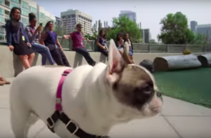 Verify Out The Campus At Amazon's Canine-Pleasant Headquarters