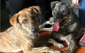 DNA Check Reunites Littermates Displaced By Hurricane Harvey