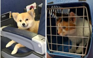How To Safely Journey By Airplane With Your Pet