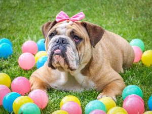 6 must have items to put in your dogs easter basket pets animals one of the best parts of celebrating easter with our furry family is putting together the basket we love giving our pets gifts and easter is just one more negle Image collections