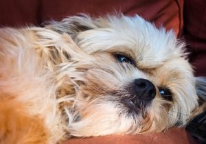 10 Frequent Pores and skin Points In Canines