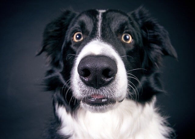 6 Natural Ingredients To Soothe Heal Your Dog S Dry Nose
