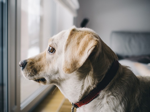 4 Reasons Senior Dog Owners Are Flocking to CBD Oil | Pets