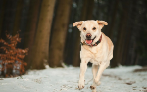 11 Canine Breeds That Make Nice Operating Companions