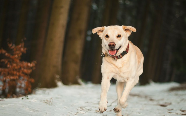 11 Dog Breeds That Make Great Running Partners