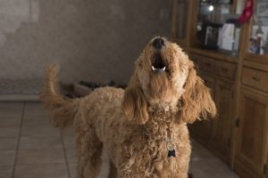 Does Your Canine Want Extra Psychological Stimulation? Right here Are 10 Indicators!