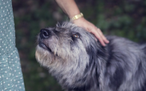 5 Ideas For Constructing An Unbreakable Bond With An Grownup Rescue Canine