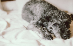 6 Concepts To Assist Your Canine Sleep By means of The Night time