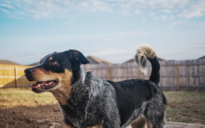Is Your Canine An Escape Artist? Attempt These Suggestions To Hold Them Residence Protected