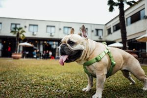 6 Causes Why Your Canine Ought to Stroll On A Harness As a substitute Of A Collar