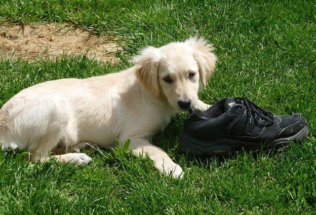 6 Reasons Dogs Bury Their Food Treats Amp Toys