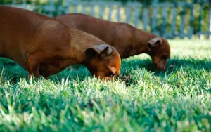 The Ugly Fact About Cloning Your Canine