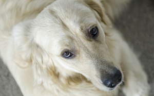 Noticing Your Senior Canine Is Experiencing Extra Pores and skin Points? This Can Assist