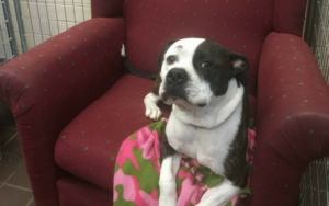 Cozy Chairs Give Shelter Canine A Style Of House Whereas They Await Adoption