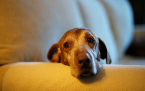 10 Indicators Of Canine Most cancers Each Canine Proprietor Wants To Know About