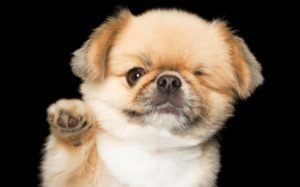 """Photographer Captures The Coronary heart & Soul Of """"Completely Imperfect"""" Canines"""