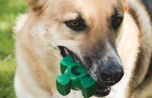 Acquired A Canine That Loves To Chew? Then You Gotta Attempt This!