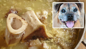 The Bone Broth Pattern: Why Are So Many House owners Giving It To Their Older Canines?