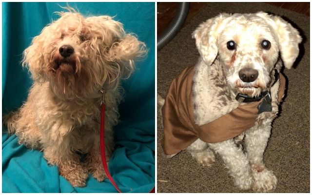 Blind, Matted Stray Dog Is Finally Getting The Care He Needs - Thanks To You!