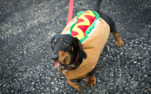 Over 1,200 Dachshunds Create Fairly The Spectacle All For A Good Trigger