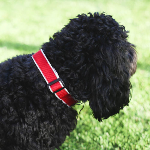 Out N' About Reflective Red Dog Collar -- Amazing Deal 90% Off!